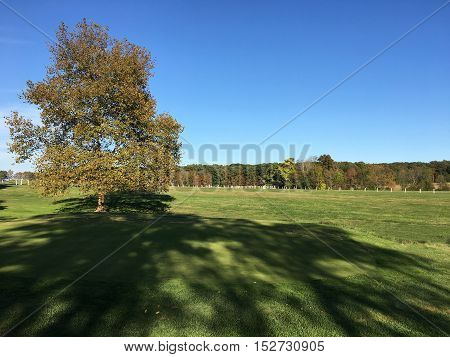 large open field on an autumn day. There is a tree and a large shadow cast from the late afternoon sun.