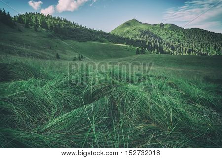 lush grass in high mountain, toned like Instagram filter