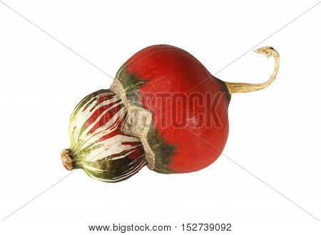 Red decorative pumpkin isolated on the white background