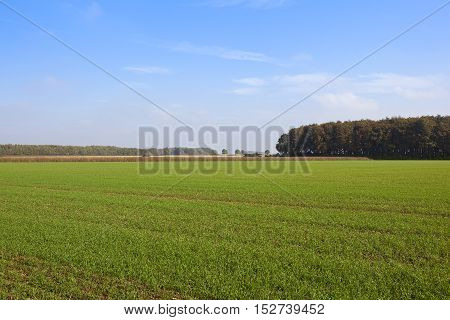 Woodlands And Wheat