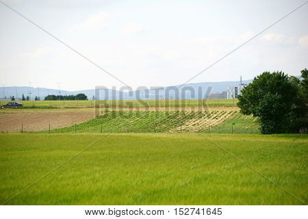 Landscape with fields and vegetable patches in Mainz against the hills of the Taunus.
