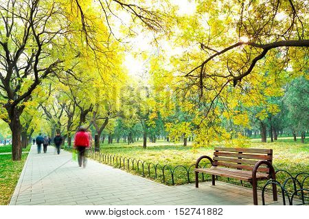 Park In The Fresh Air Of The Boulevard And Chair