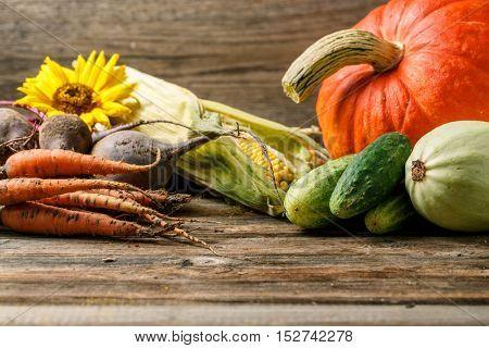 Various rustic vegetables