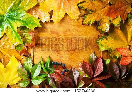 Colorful autumn leaves on a wooden background