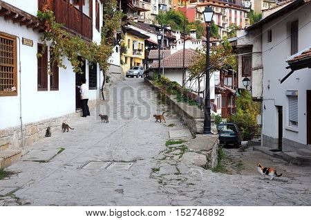 VELIKO TARNOVO BULGARIA - OCTOBER 20 2016: Woman and hungry stray cats in General Gurko street