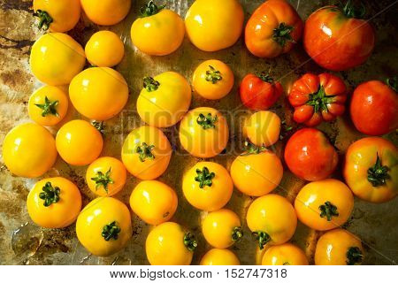 Fresh colorful tomatoes on a tray, top view