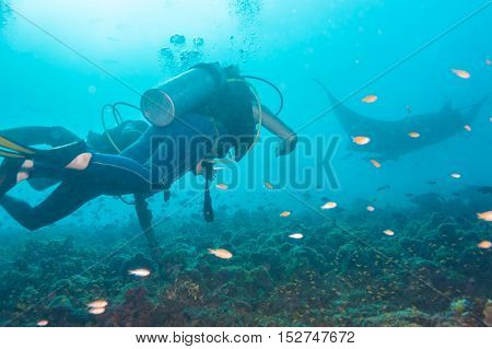 Underwater Divers Are Watching Mantas At A Cleaning Station, Maldives