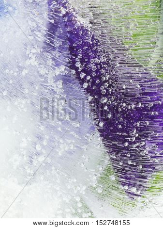 bright beautiful delicate purple and green abstract organic frozen in water with air bubbles