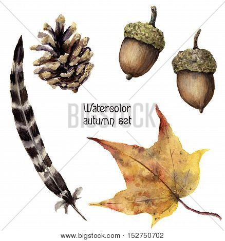Watercolor autumn set. Hand painted pine cone, acorn, feather and yellow leave isolated on white background. Botanical illustration for design.