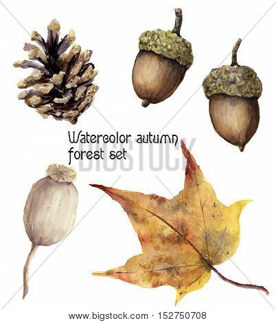 Watercolor autumn forest set. Hand painted pine cone, acorn, berry and yellow leave isolated on white background. Botanical illustration for design.
