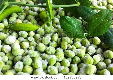 fresh frozen green peas and many  pod