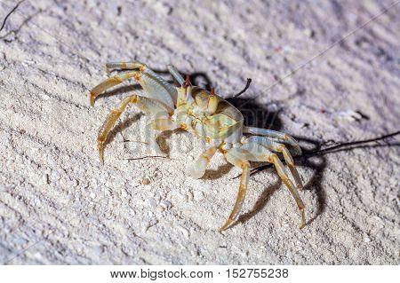 Crab On Sand Beach At Night, Maldives