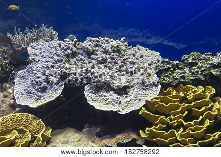 coral reef with hard corals fishes and sunny sky shining through clean water