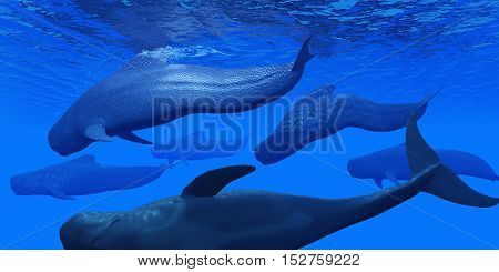 Pilot Whale Pod 3D Illustration - Pilot whales live together in large pods in the world's oceans and hunt for squid and fish prey.