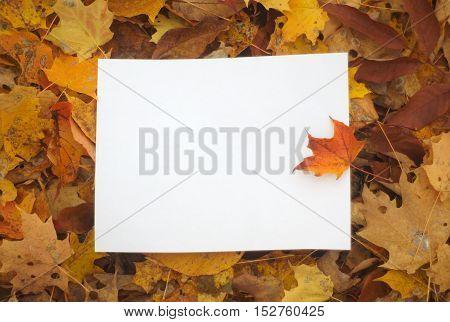 white paper on leaves background, orange maple autumn border