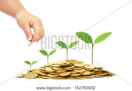 Hand of a baby giving a golden coin to green plants growing on a pile of golden coins / Green business and investment / Business with csr and environmental concern