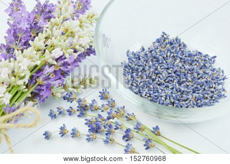 close up of lavender flowers with white background
