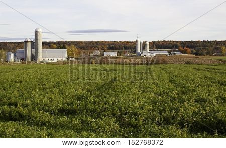 Quebec City, QC, October 17 -- Grain farm with colourful foliage fields buildings and silos just outside of Quebec City on route 132 bordering the Saint Lawrence River on a sunny day with wispy clouds in October.