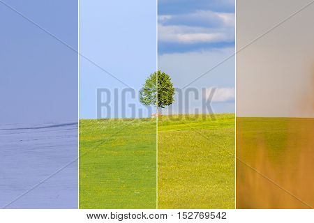 Climate change winter spring summer fall over the year blocks. Nature weather visual with a single tree on a hill. Cold snow and a juicy green meadows have a transition to a warm autumn field.