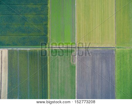 Aerial view of green fields with canals in Netherlands