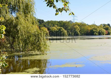 A lake shoreline during the early fall