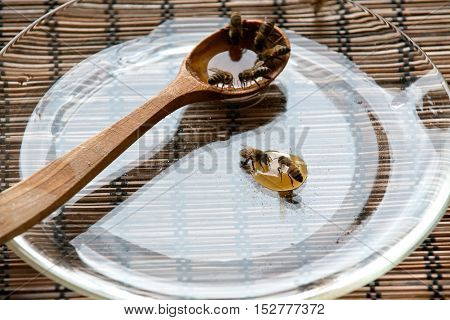 Feeding hungry bees with honey before long winter
