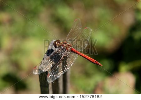 Dragonfly sitting on a rod in bright summer sunlight