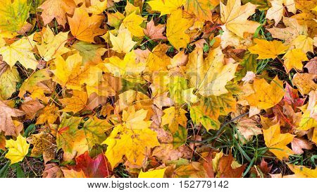 Fallen yellow and red leaves, autumn ground texture.