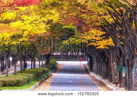 Incheon Grand Park During Autumn