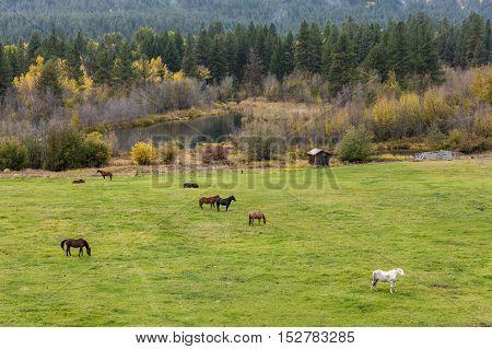 Horses in a field near Winthrop Washington.
