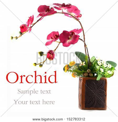 orchid  flowers in a vase isolated white background.