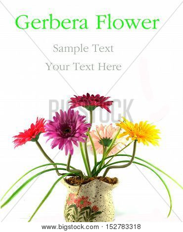 Multi Colored Gerbera flowers in a vase isolated white background.