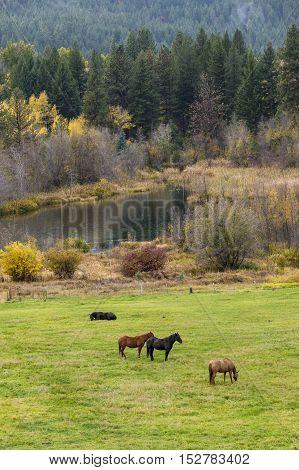 Horses grazing in a green field near Winthrop Washington.