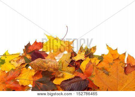 Autumn Multicolor Leafs