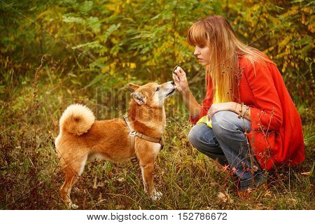 Girl plays with a dog Shiba Inu in autumn park. Pet. Pedigree dog. Funny animals and their owners. Riot of colors of nature. Outdoor Activities.