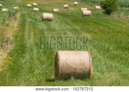 Landscape photo of rolled hay on a field, Croatia