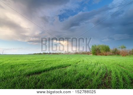 evening field rural landscape / vivid pictures of last night out of the city before the rain