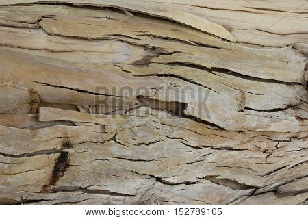 Rough brown bark from a large tree
