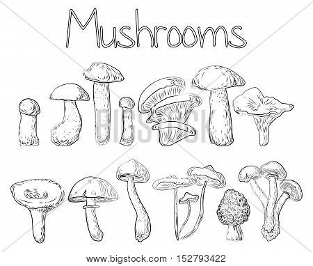 Mushrooms forest edible oyster chanterelle percini cap boletus greasers honey agaric aspen russule. Vector horizontal closeup side view outline black white illustration sign set collection background