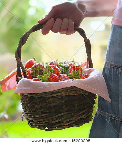 Una canasta de fresas de explotación de la mano de la mujer.