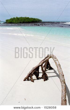 Galapagos, Tortuga Bay