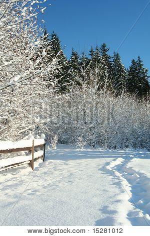 Winter snowy landscape.