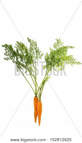 carrots with fresh green leaves on a white background