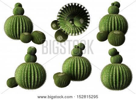 Cactus isolated, multiple perspectives, on white background