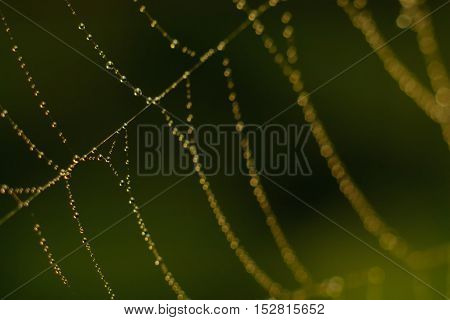 Drops On The Web