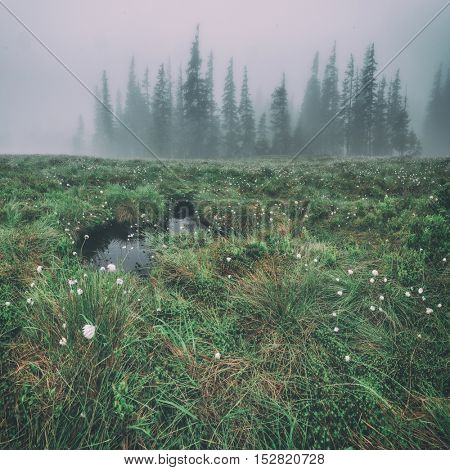 small bog in foggy meadow, toned like Instagram filter