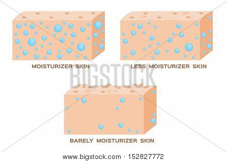 moisturizer in skin . 3 level of moisturizer . vector . anatomy