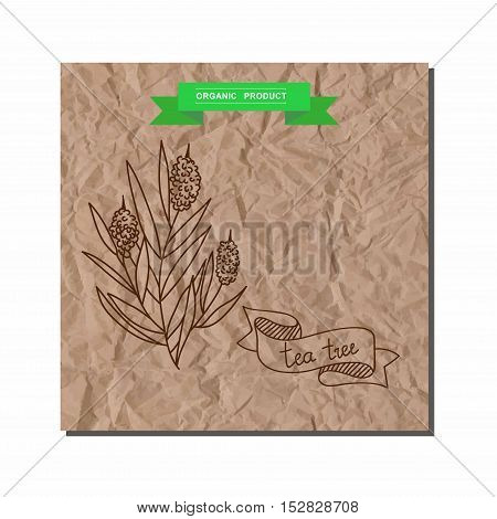 Herbs and Spices Collection - tea tree. Suitable for ads, signboards, packaging and identity designs