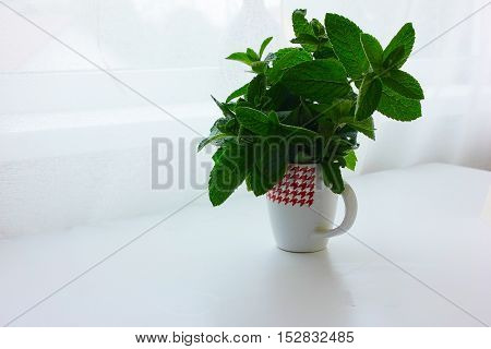 fresh mint in a cup of water on white background