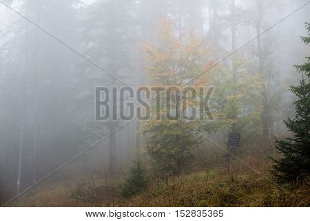 Colorfull Autumn Trees In Heavy Mist In Forest